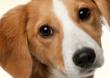 Kostenlose Hundefutterproben von verschiedenen Anbietern erhalten