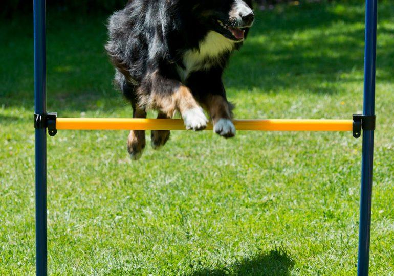 Dog Agility Starter-Set dank Neukundengutschein ab 54,95€