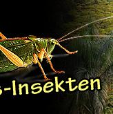 Gratis Insekten zu jeder Bestellung
