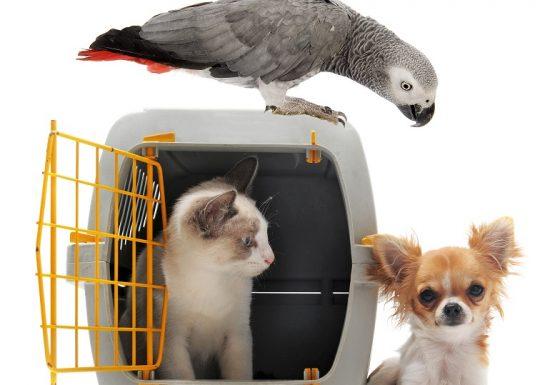 Richtige Transportbox für (kleine) Hunde und Katzen
