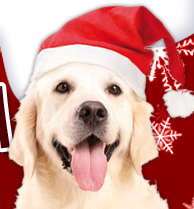 Großer Weihnachtsartikel_Ausverkauf bei Schecker