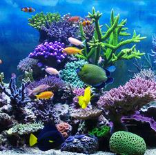Das Aquarium für Einsteiger