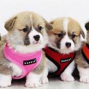 25% Rabatt auf Puppia Hundegeschirre bei Amazon