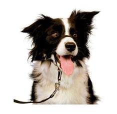 Amazon Blitzangebote für Haustiere am 07.10.2015