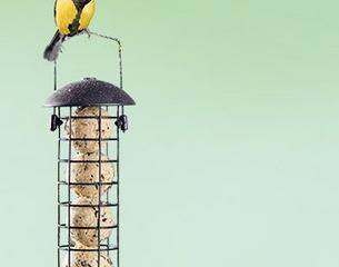 Amazon: 5€ Rabatt auf Dehner Natura Wildvogelfutter