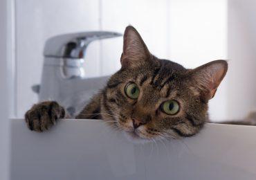Abkühlung für Katzen - an heißen Sommertagen