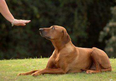 Online Hundeschule - die günstige Alternative