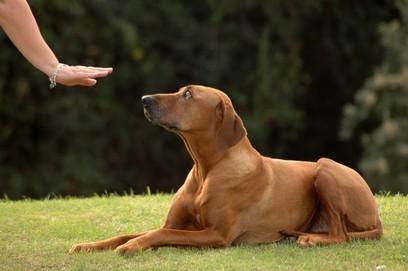 Online Hundeschule – die günstige Alternative