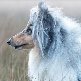 Alsa Hundewelt: 15€ Rabatt ab 20€ Bestellwert für Neukunden