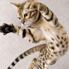 Royal Canin 10kg Katzenfutter kaufen + Rascheltunnel gratis bekommen