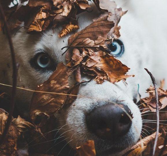 Terra Canis: 16% Rabatt auf das gesamte Sortiment ab 39€ Bestellwert (außer AliVet und B.A.R.F.)