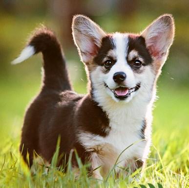 *NUR HEUTE* alsa-hundewelt: 15% Rabatt auf fast Alles (ab 20€ MBW)