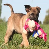 Lucky-Pet: 10% Rabatt auf alle Hundespielzeuge (ohne MBW)