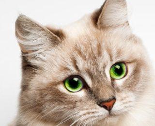 Zooplus: Wau der Woche - Purizon Hunde- oder Katzesnack GRATIS zu jeder Bestellung