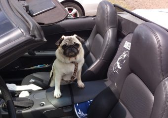 Mit dem Hund auf Reisen: So dürfen Hunde im eigenen Pkw transportiert werden
